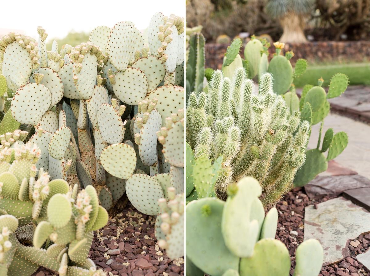 saguaro, cactus photographer, desert botanical garden, phoenix photographer, arizona photography, cactus photos